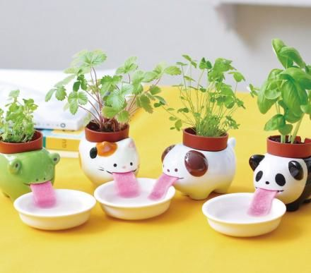 Water-Sipping Planters