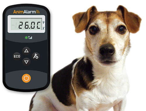 Puppy Temperature Car Monitors