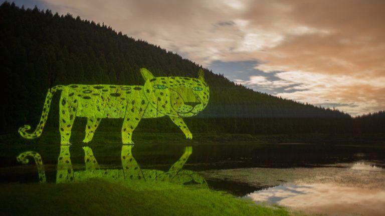 Safari Animation Installations