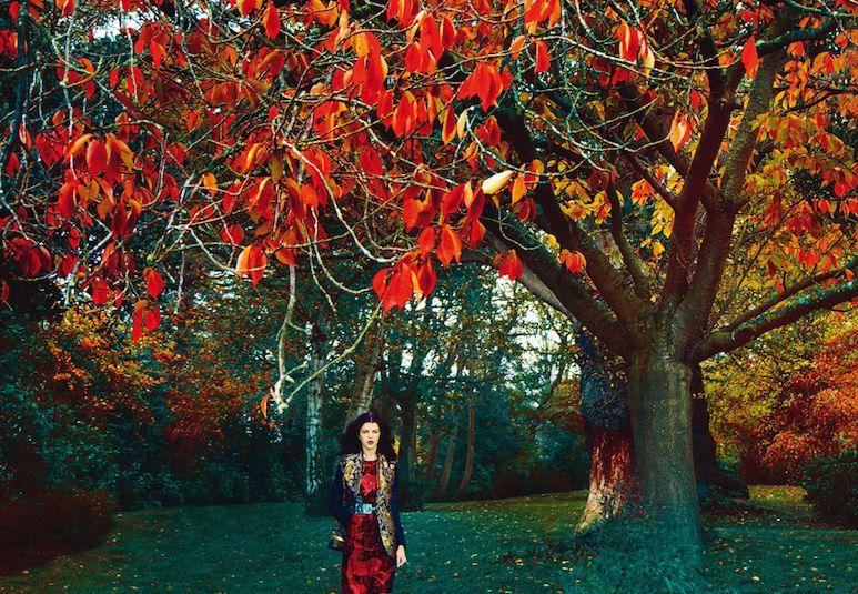Enchanting Woodland Editorials