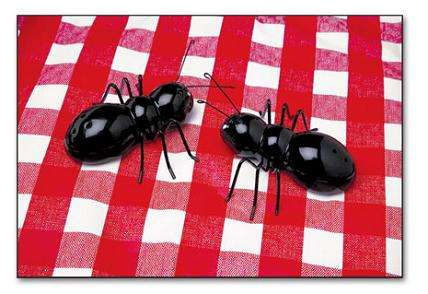 Insect-Shaped Kitchenware