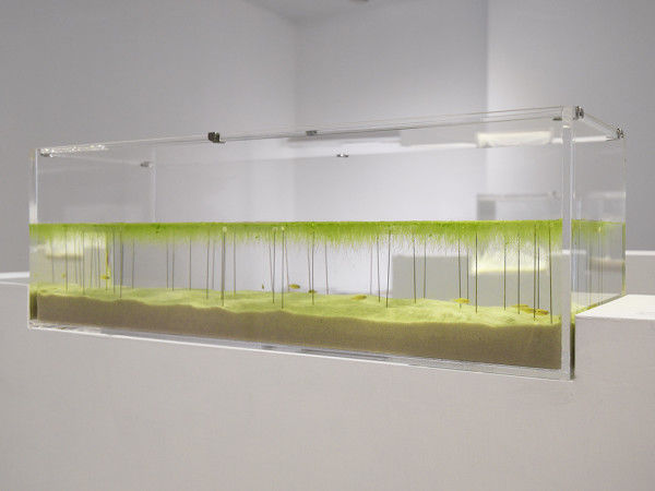 3D-Printed Aquariums
