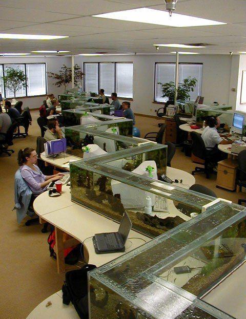 Aquarium Desk Dividers