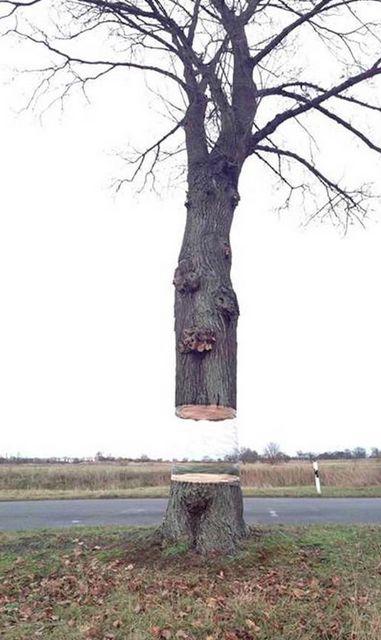 Illusory Hovering Tree Art