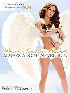 Animal Rights Angels