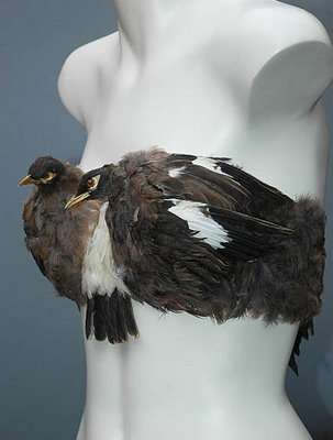 Avian Lingerie