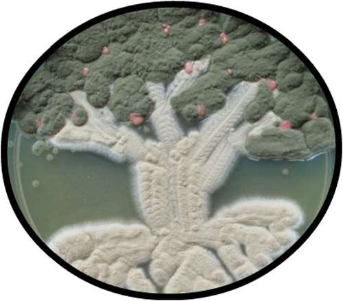 Bacterial Art