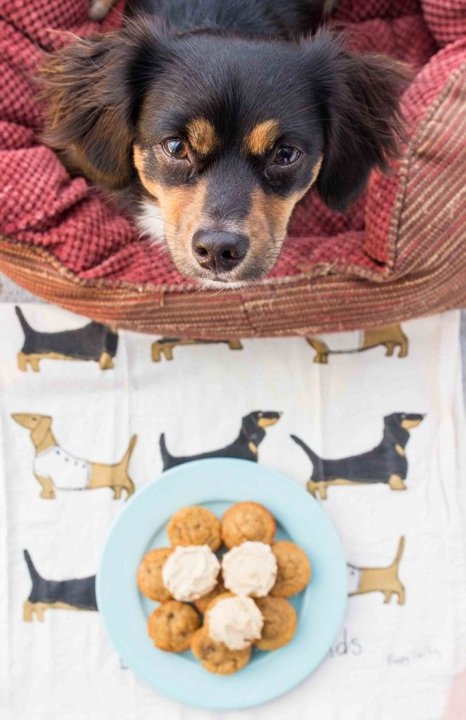 Pet Friendly Banana Cakes Banana Cakes