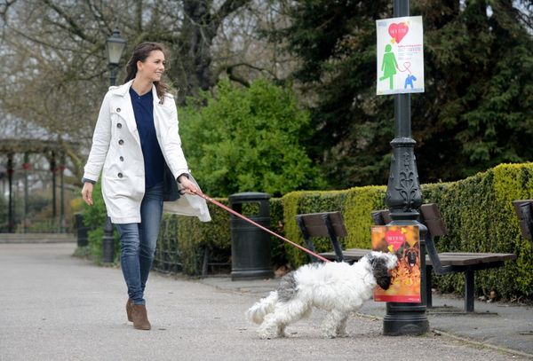 Pet Food-Scented Posters