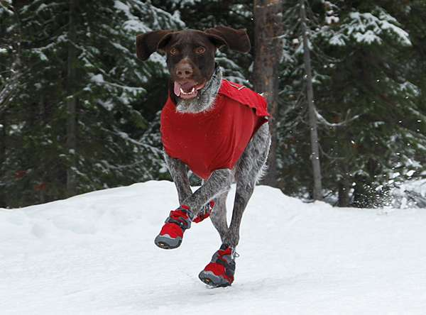 Canine Snow Shoes