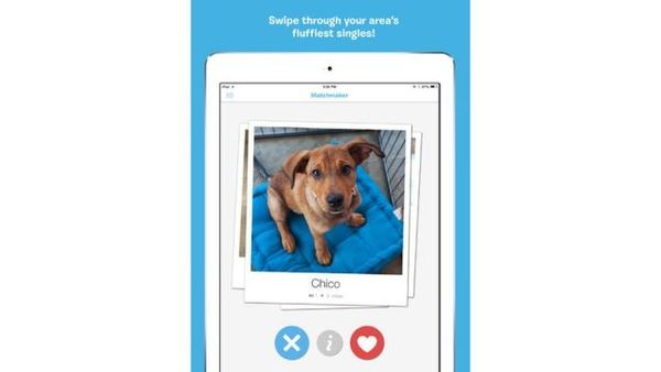 Pup Adoption Apps
