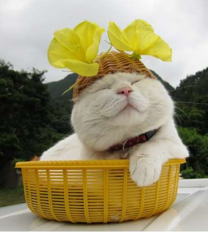 Basket Cat Blog