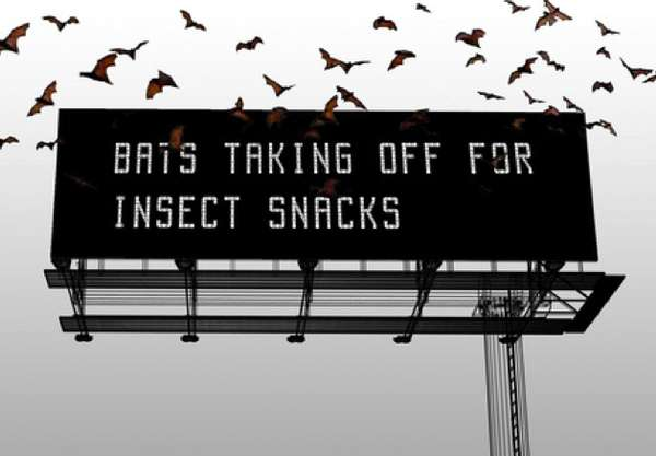 Bat Billboard