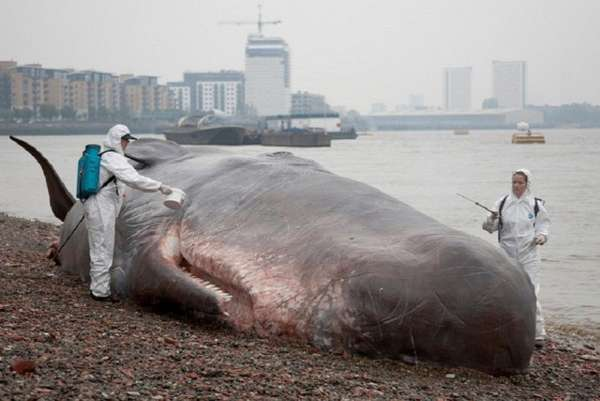Morbid Whale Sculptures
