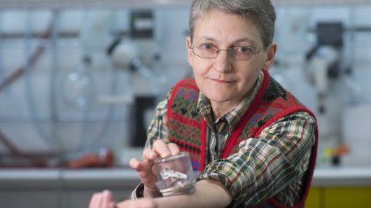 Chemical-Based Bedbug Traps