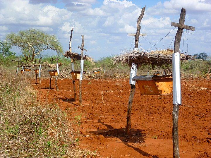 Bee Hive Elephant Fences