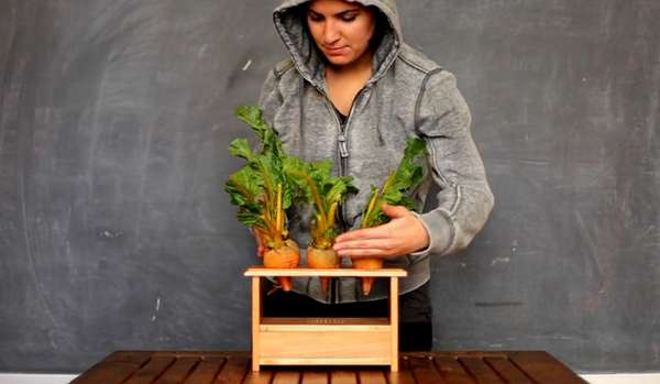 Vegetable-Based Musical Instruments
