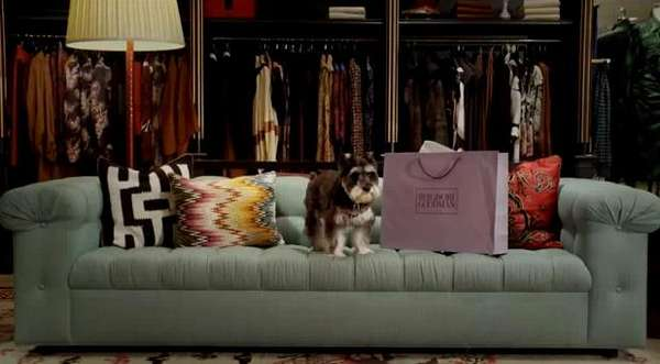 Dog-Filled Department Stores