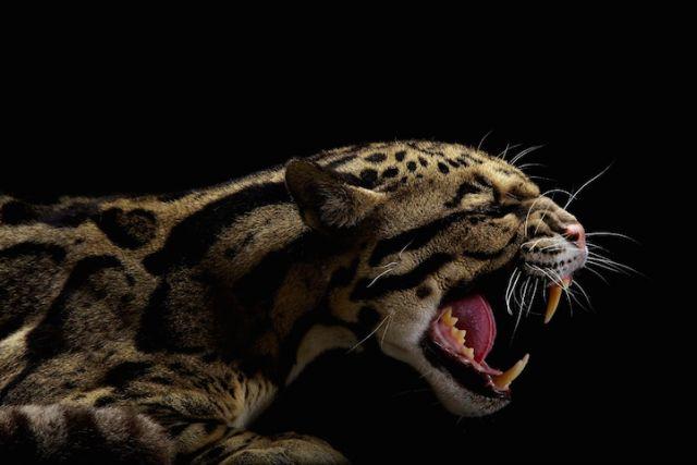Ferocious Feline Photography