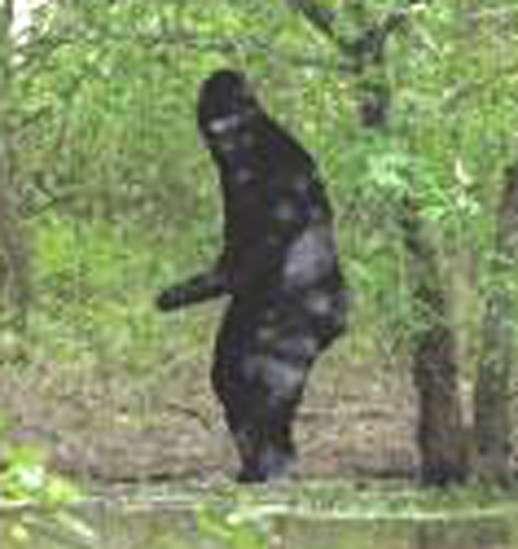 Capitalizing on Bigfoot