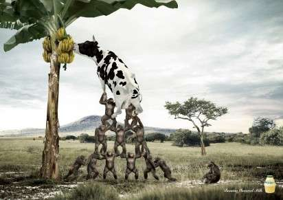 Fruit-Munching Cow Ads