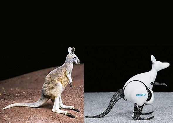 Bionic Kangaroos