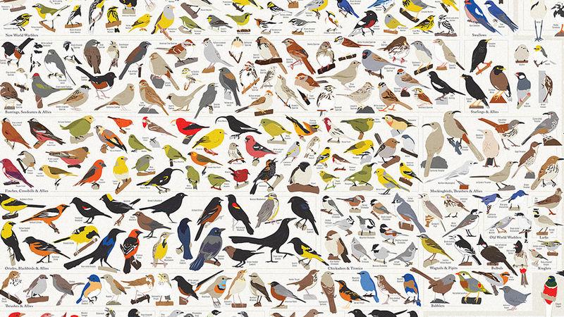 American Avian Charts