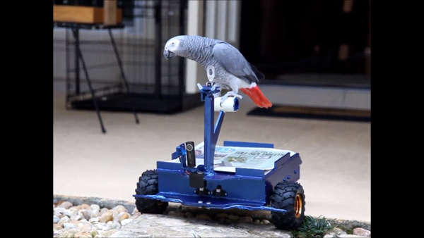 Avian Transportation Gadgets