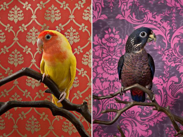 Vibrant Fowl Photography