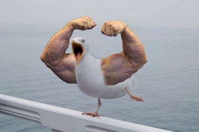 Hilarious Avian Mash-Ups