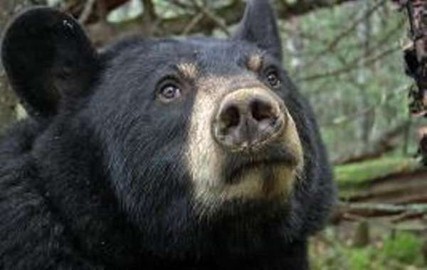 Broadcasting Birthing Bears