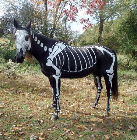Horsey Halloween Costumes