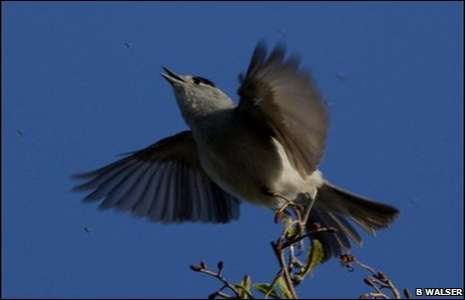 Avian Eating Lessons