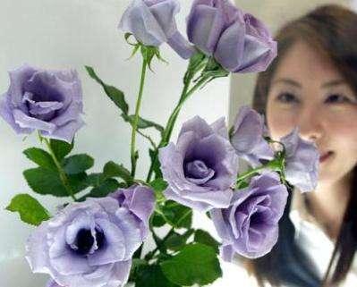 Genetically Modified Flowers
