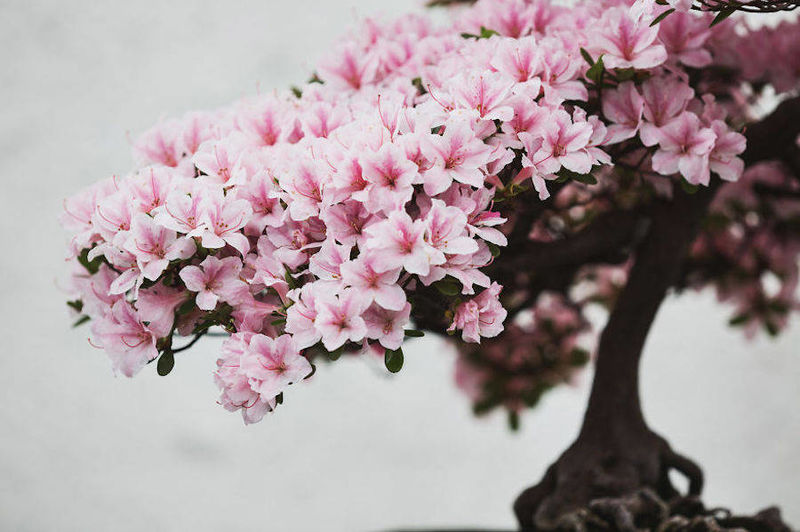 Intricate Bonsai Photography