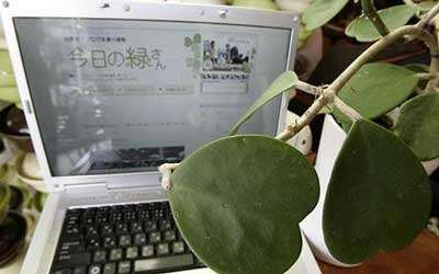 botanical bloggers japanese plant authors blog. Black Bedroom Furniture Sets. Home Design Ideas