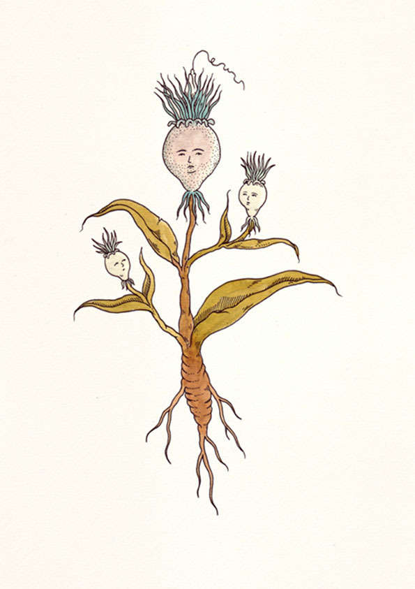 Character-Filled Plant Illustrations
