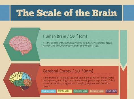 Brain-Sizing Infographics