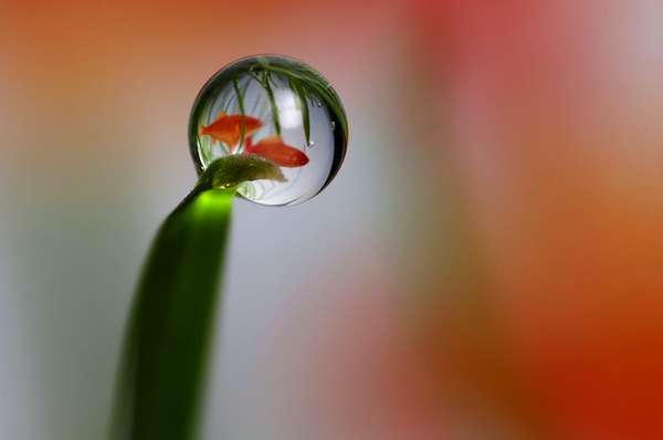 Wicked Water-Drop Photography