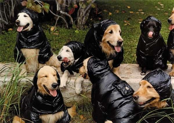 Puffy Coats for Pooches