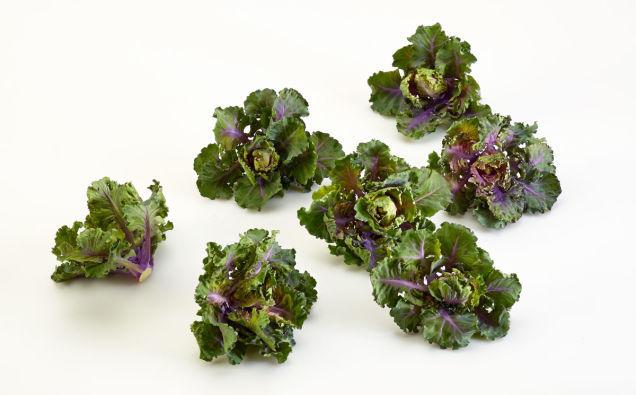 Futuristic Food Hybrids