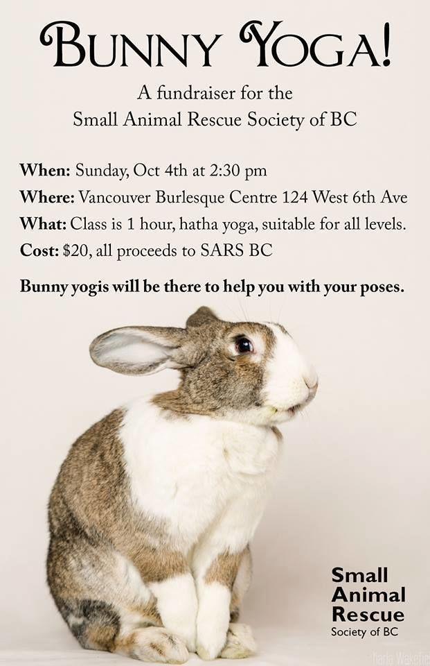 Rabbit Yoga Classes