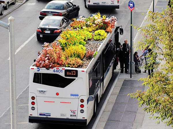 Planted Transit Shrubs