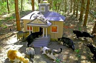 Cat Villages