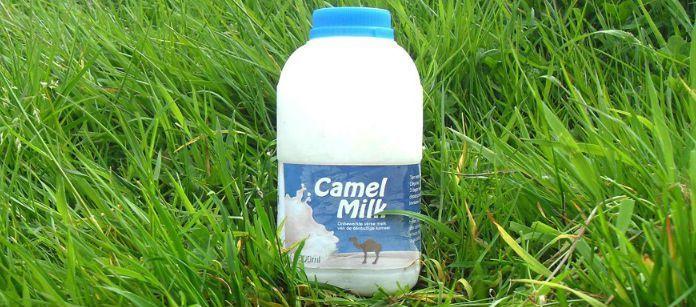Nutritious Camel Milks