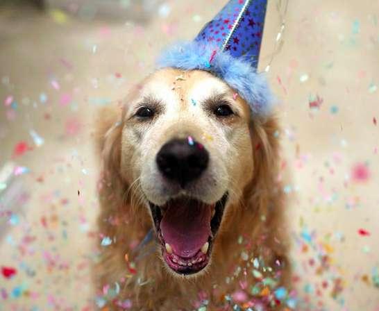 Celebrated Canine Portfolios