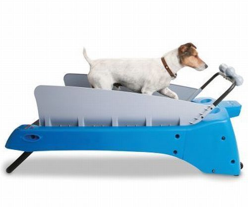 Workout Equipment for Dogs