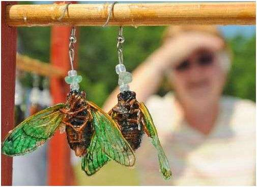 Insects as Jewelry