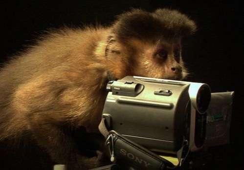 Primate Producers