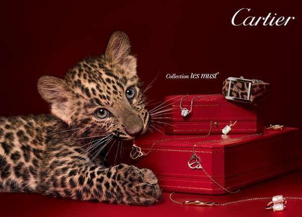 Luxury Panther Cubs